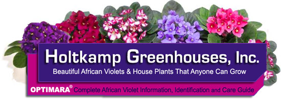 Plant Care Instructions For African Violets