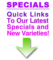 Latest Specials from SelectiveGardener