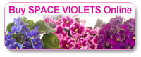 Get an EverFloris 'Space Violet' today!