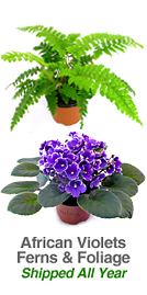 Violets and Exotic Foliage